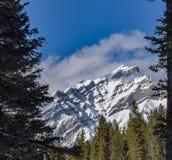 Гора замка обрамленная лесом стоковое фото rf