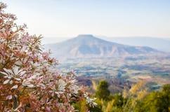 Гора заслуживает иметь цветки Стоковое Изображение RF