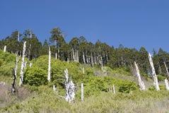 гора зеленого цвета пущи сценарная Стоковое Фото