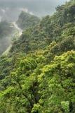 гора зеленого цвета пущи Стоковые Фотографии RF