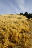 Гора зерна Стоковое фото RF