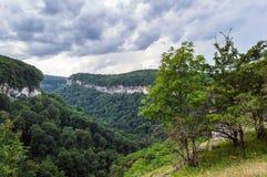 гора зеленого цвета пущи Стоковая Фотография RF