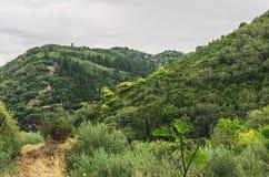 гора зеленого цвета пущи Стоковое фото RF