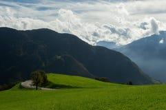 Гора зеленой травы Стоковая Фотография RF