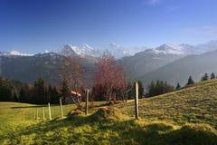 гора золы alps Стоковое Фото