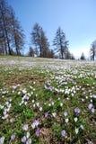 гора Италии цветков alps Стоковые Изображения RF