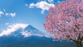 Гора и вишневые цвета Фудзи весной, Япония Стоковые Изображения RF