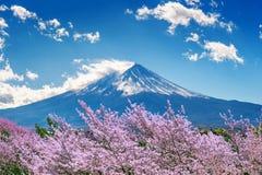 Гора и вишневые цвета Фудзи весной, Япония Стоковые Фото