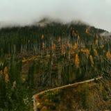 Гора и деревья стоковые фотографии rf
