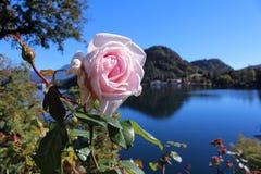 Гора и озеро розы пинка позади Стоковое Фото