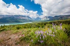 Гора и полевой цветок весной, национальный парк ледника Стоковые Изображения