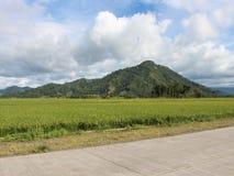 Гора и поле стоковые фотографии rf