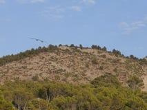Гора и птицы Стоковое Изображение