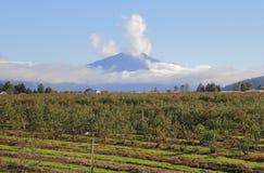 Гора и сельскохозяйственное угодье пика Джеймс Стоковое Изображение RF