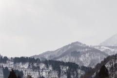 Гора и сосновый лес снега стоковая фотография rf