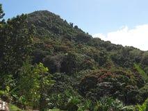 Гора и сочный зеленый цвет Стоковое Изображение