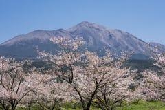 Гора и цветки стоковая фотография