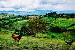 Гора и цыпленок Стоковое Фото