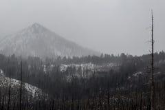 Гора Лаке Таюое Стоковое Изображение