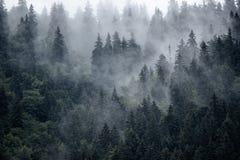 гора ландшафта туманная стоковые фото