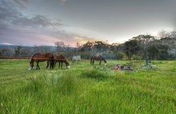 гора лошадей снежная стоковое фото