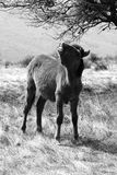 гора лошадей Стоковое Изображение