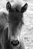 гора лошадей Стоковые Фото