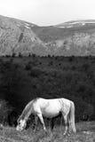 гора лошадей Стоковые Фотографии RF