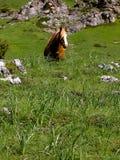 гора лошади Стоковые Изображения RF