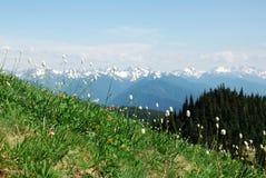 гора лужка олимпийская Стоковые Изображения