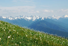 гора лужка Стоковое Фото