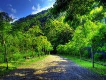 гора майны Стоковые Фотографии RF