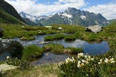 гора озера цветка около рододендрона Стоковое Изображение