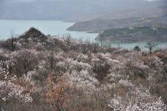 Гора & озеро стоковое изображение rf