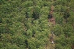 Гора океана Anji бамбуковая стоковое изображение rf