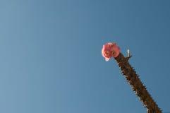 Гора 8 покрашенная immortals цветков зацветая красивая соперничает Стоковое Фото