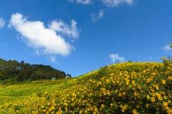Гора покрытая мексиканским солнцецветом Стоковое фото RF