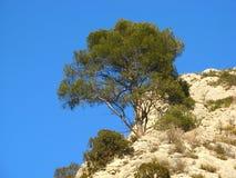 гора Провансаль ландшафта Стоковое фото RF