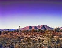 Гора пустыни стоковые изображения