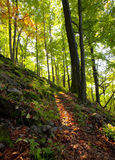 гора пущи дня осени прикарпатская солнечная стоковое фото