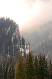гора пущи снежная стоковое изображение