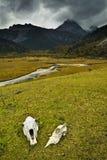 гора пущи Стоковое Фото