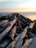 Гора древесины пляжа стоковое фото