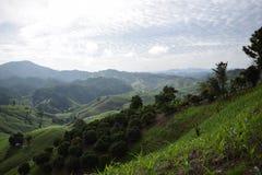 Гора риса Стоковая Фотография