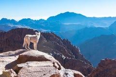 Гора Синай, держатель Моисей в Египте Стоковая Фотография RF
