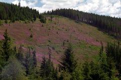 гора стороны Стоковые Фото