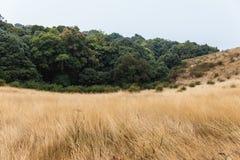 Гора с золотой травой и зеленым кустарником с древесинами в предпосылке на всем пути к лотку Kew Mae в Чиангмае, Таиланде Стоковая Фотография RF
