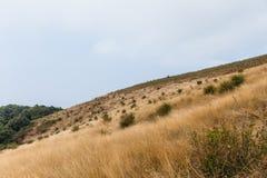 Гора с золотой травой и зеленым кустарником на всем пути к лотку Kew Mae в Чиангмае, Таиланде Стоковые Фото