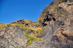Гора с птицами n стоковая фотография