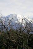 Гора с снегом стоковые фото